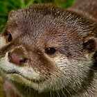 Otter-ly cute ! ......... by jdmphotography