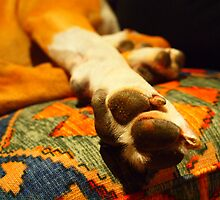 let sleeping dogs lie by Cassandra Roland