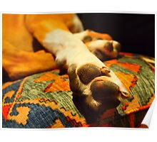let sleeping dogs lie Poster