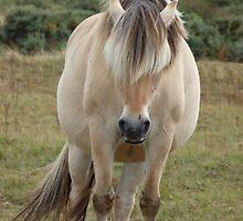 Horse (Equus ferus caballus) by DutchLumix