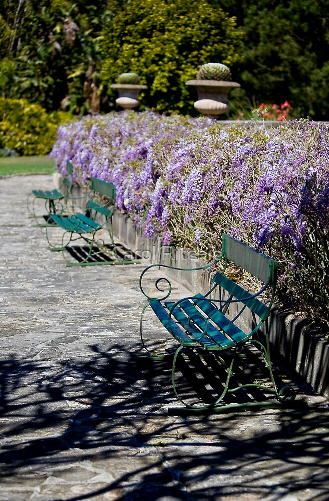 A Place to Sit by Carol Ritchie