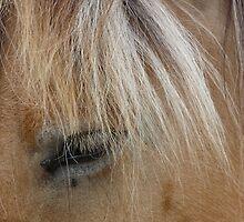 Horse 3 (Equus ferus caballus) by DutchLumix