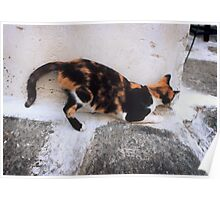 Playful Greek Calico Poster