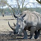 Rhino - Lake Nakuru, Kenya by Brad Francis