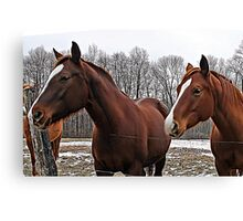 Indiana Horses Canvas Print