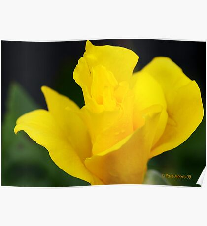 Flowers - Yellow Rose Poster