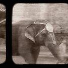 Elephant Walk by Rene Hales