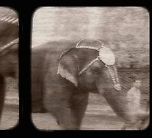 Elephant Walk by Rene Hales