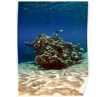 Beutiful corals  Poster