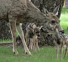 Newborn Bambies  by Judy Grant