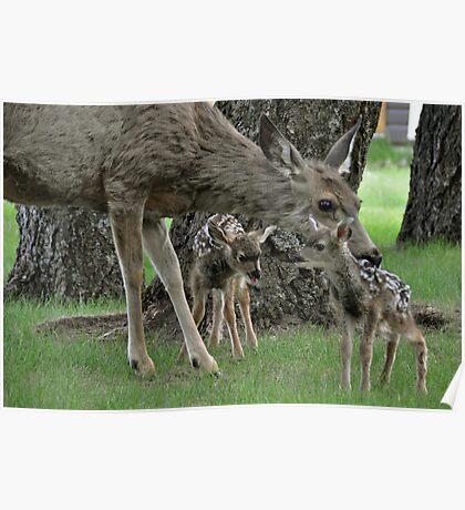 Newborn Bambies  Poster