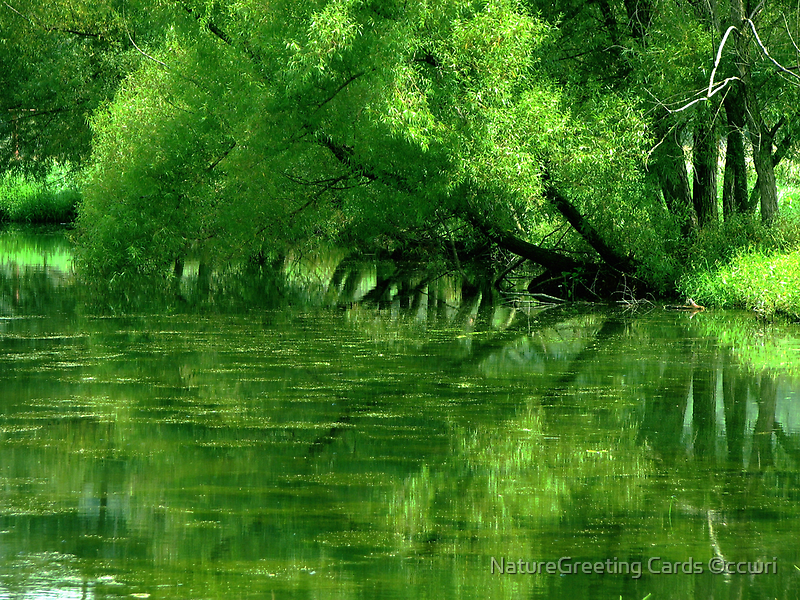 Reflections by NatureGreeting Cards ©ccwri