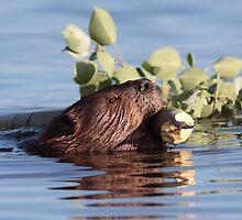 Busy as a Beaver by Jillian Johnston