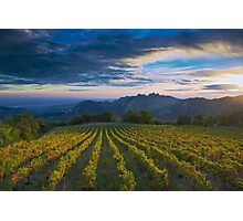 French Vineyard at Sunset Photographic Print