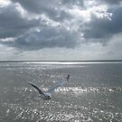 Seagull by Mike Paget