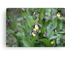 Ladys slipper Orchid Canvas Print
