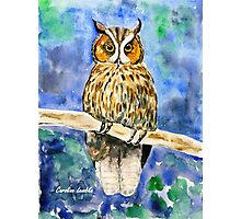 Wise Owl Photographic Print