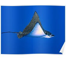 Eagle Ray Poster