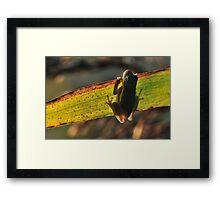 American Green Tree Frog #7 (Calendar) Framed Print