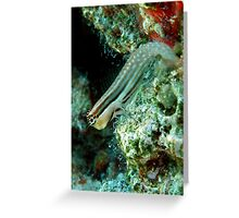 Blenny Greeting Card