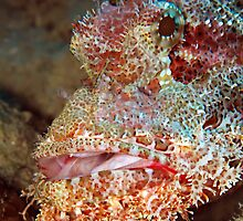 Scorpionfish by cooperscuba