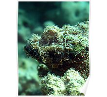 Bearded scorpionfish Poster