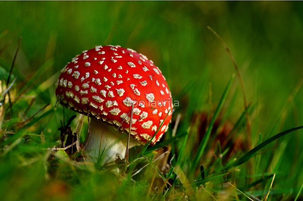 Fly agaric    by ilpo laurila