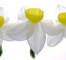 'Spring Ballet Series - Jonquil Trio' by Madonna McKenna