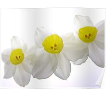 "'Spring Ballet Series - Jonquil Curtsy"" Poster"