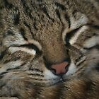 Sleeping Cat by SmileyShazza