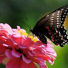 A FLOWER ROMANCE -II- by mc27