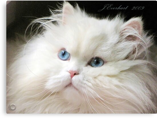 Baby's Got Blue Eyes by Julie Everhart