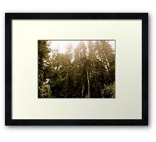 Piney Skylines Framed Print