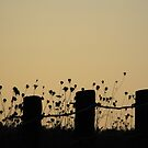 Posts at Sunset by katpix