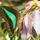 Blue Triangle Butterfly by Teale Britstra