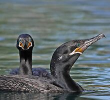 Neotropic Cormorants by tomryan