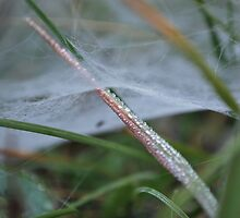 Web in the Misty Morning by AylaM