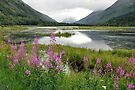 A Summer Scene - Tern Lake Alaska by Barbara Burkhardt