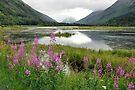 A Summer Scene - Tern Lake Alaska by Barbara Burkhardt