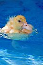 Swimming Lessons by Renee Hubbard Fine Art Photography