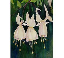 White Fuschias (Sleigh Bells) Photographic Print