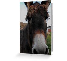 Irresistible Face Greeting Card