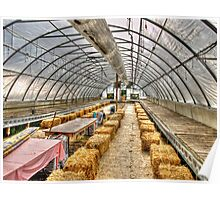 Green House and Bails Poster