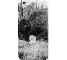 Lone Buffalo  iPhone Case/Skin