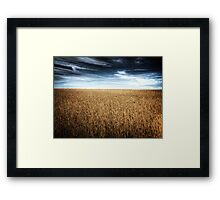 Alberta Wheat Field Framed Print