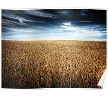 Alberta Wheat Field Poster