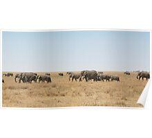 Elephant Herd, Serengeti, Tanzania  Poster