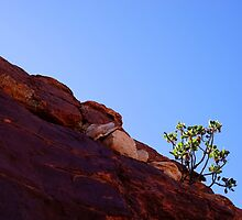 """Australia: """"Tough Life"""", Northern Territory by Kelly Sutherland"""