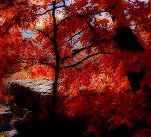 Autumn Glow by NatureGreeting Cards ©ccwri