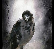 Polly by Alexandra Ekdahl